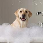 การอาบน้ำสุนัขอย่างถูกวิธี