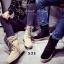 พร้อมส่ง รองเท้าผ้าใบหุ้มข้อสีแอปริคอท ผ้าสักหราด แฟชั่นเกาหลี แฟชั่นเกาหลี [สีแอปริคอท ] thumbnail 5
