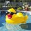 ห่วงยางแฟนซี เป็ดเหลือง Giant duck float thumbnail 1