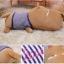 ตุ๊กตาหมาหมอนข้างหัวโต เสื้อลายสีน้ำเงิน Pre-Order thumbnail 4
